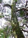 2006_1112yoshinogawa0092