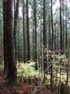 2006_1112yoshinogawa0120