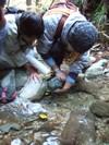 2006_1112yoshinogawa0169