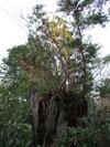 2006_1112yoshinogawa0229