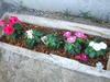 2007_0423yoshinogawa0004