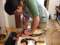 2007_0503yoshinogawa0009